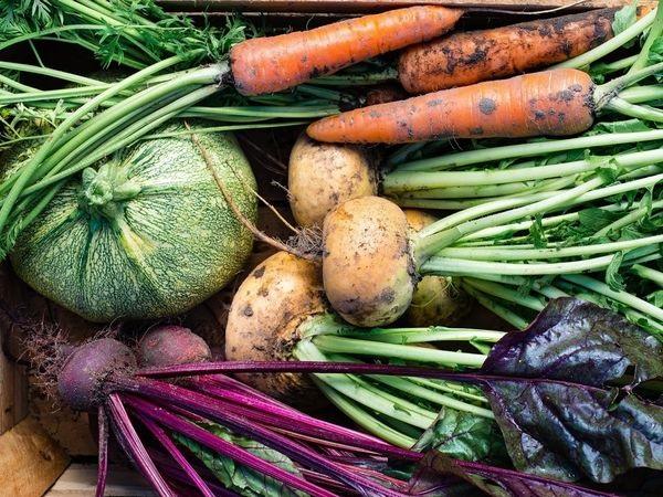 食欲の秋・収穫の秋「10月に旬を迎える野菜」