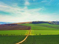 農業を通じて地球環境を守りたい。社名に込めた志を貫く「ドクター・オブ・ジ・アース」の10年