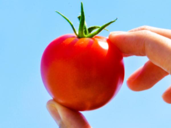 頑張るよりも夢中になる 経営者として感じる農業のおもしろさ