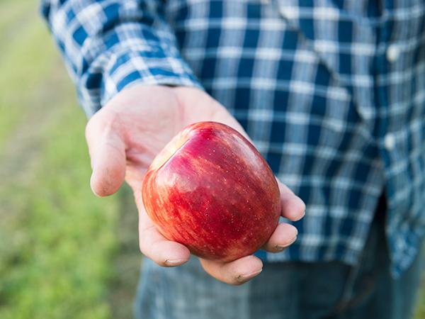 リンゴの有機栽培を実現するための親子二代の挑戦 ~100年後も続く果樹園を作る~