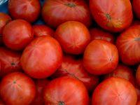 トマトグルメがうなる「幻のトマト」で作る「トマト以上のトマト味」