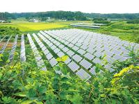 全国1,000人の農家が始めている「ソーラーシェアリング」のメリット