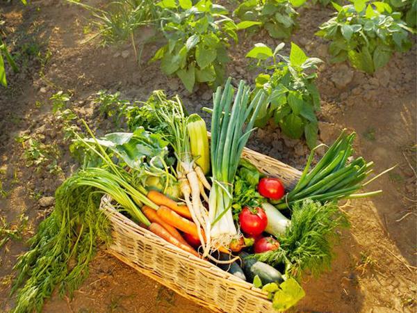 【ふるさと納税】1万円以下でもらえるオススメの無農薬野菜Best10