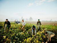 次世代農業を応援! フリーマガジン『AGRI JOURNAL』最新号発行