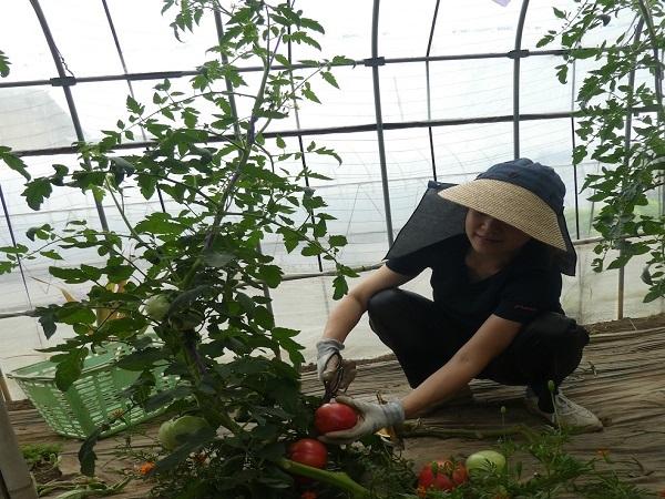 育てる野菜の基準は「みんなと食べたい」 ライフスタイルに合わせた兼業農家へ
