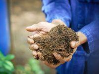 農業で成功する秘訣とは【土地選び編】