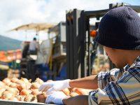 農業を始めるなら独立起業、それとも就職? 選べる二つの方法【就農ことはじめVol.2】