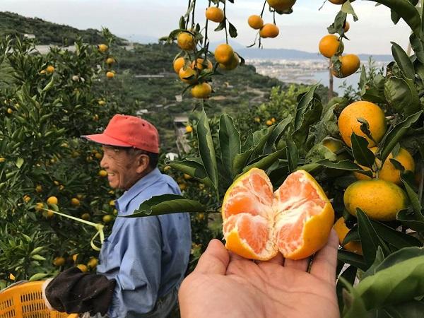 みかんからレモンへ!小田原市が取り組む、耕作放棄解消の秘策とは【PR】