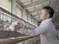 卵とプリンで年間売上5000万円 純国産ヒヨコを育てるカリスマ養鶏家3つのブランド術