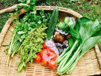 耕作放棄地を一人で耕し就農 自然栽培を貫く女性農家のスタイル