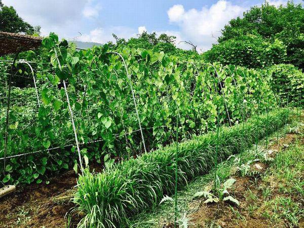 自然栽培農家