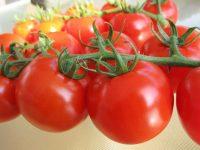 収穫期間が約2倍に!「オランダのハウス栽培技術」で躍進するトマト農家