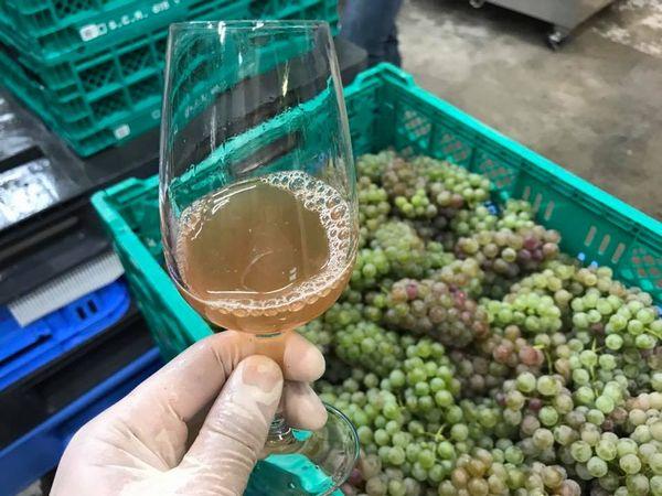 南三陸ワインプロジェクト
