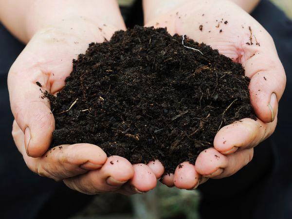 注文が殺到!有機農法に最適な「ミミズの力で栄養満点の土作り」