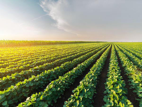 農家も実践したい!コンパニオンプランツ5選【上級者向け】