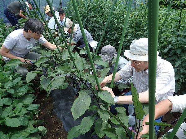 農家を手伝う技術を学ぶ!練馬区が始めた「ねりま農サポーター」