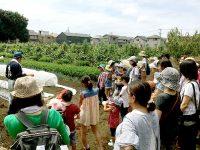 1日300人が参加!練馬区「みやもとファーム」3つの農業体験