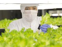 1日3万株のレタス栽培を自動化!次世代型の植物工場とは