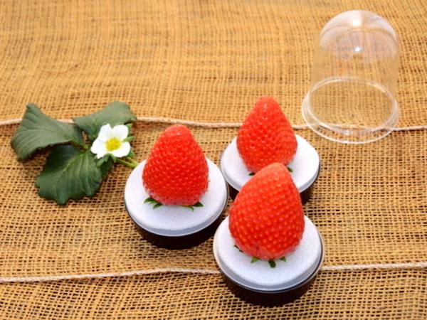 海外で大人気!新型容器で拓ける「日本産完熟大粒イチゴの市場」