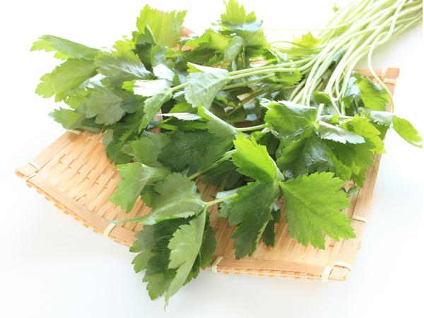 日本料理に欠かせない!ミツバの保存法・調理法【野菜ガイド】