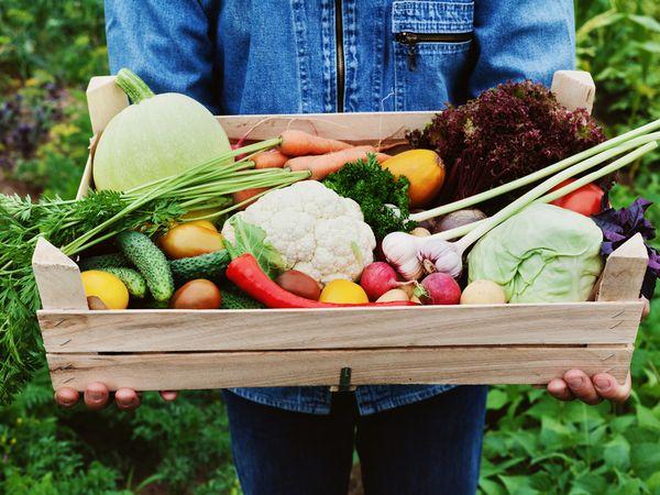 5,000円でもらえる!おすすめ野菜の詰め合わせBest5【ふるさと納税】