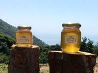 熱海と小笠原をつなぐ「非加熱・減農薬のローハニー」を作る養蜂家