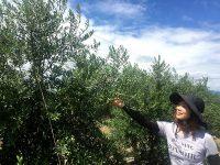 販路を確保して栽培スタート クレアファームの静岡県産オリーブオイル