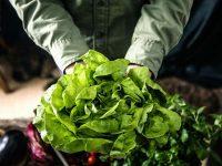 65%が販売価格に満足!オーガニックに対する農家の意識と実態