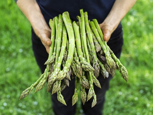 ゆでて冷凍保存もできる アスパラガスの栄養と保存法【野菜ガイド】