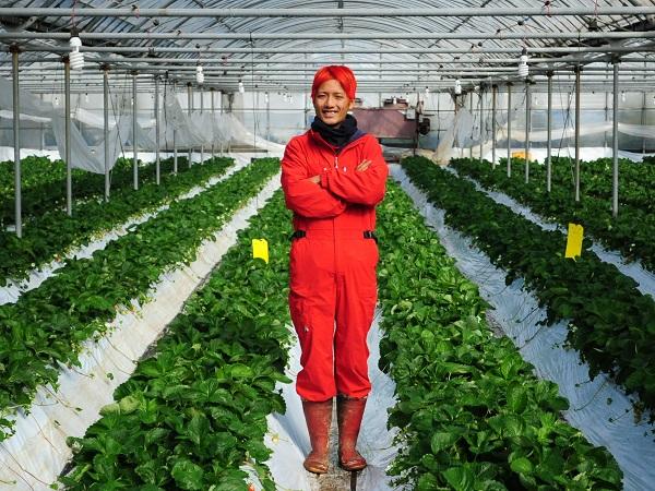 軍資金20万円、無借金でIターン就農 若きイチゴ農家の名案とは