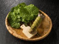 薬味5品種おいしく食べるポイントと保存法 ワサビ・山椒の実・ホジソ・芽ネギ・木の芽【野菜ガイド】