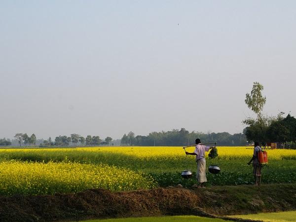 国が違えば発想も違う!? 世界のユニーク農法~バングラディッシュ編~