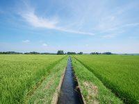 改めて知りたい、灌漑(かんがい)の意味とは?灌漑用水って何?