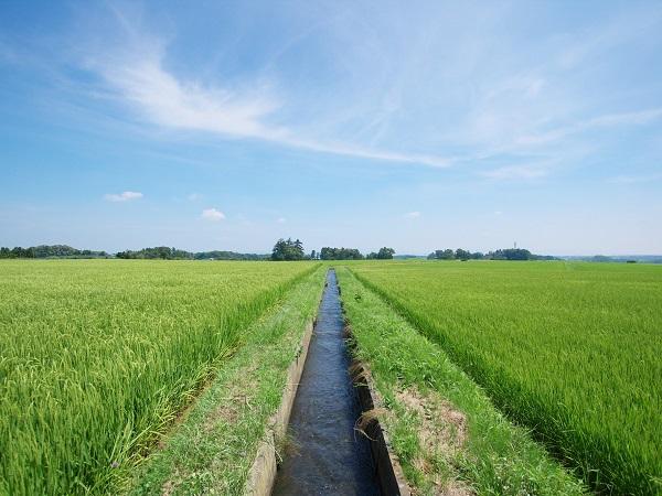 改めて知りたい、灌漑(かんがい)ってどんなもの!?