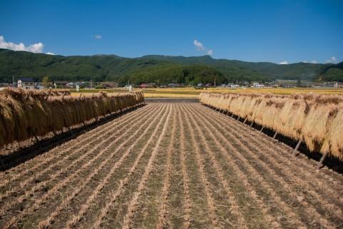 ふるさと納税で農業支援 お礼の品の魅力は農家にあり