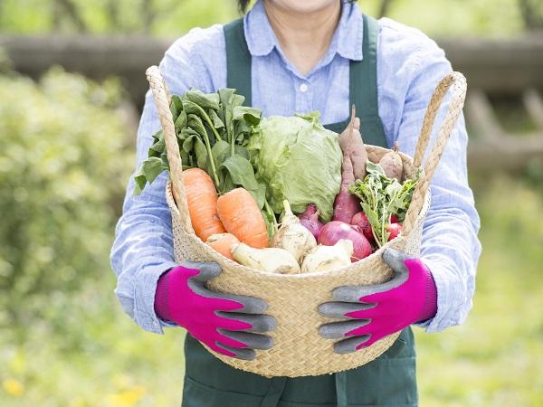 農業で成功する秘訣とは【作物選び編】