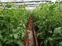 【第5回】安心安全な農作物を作り続ける農場づくり