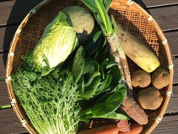 あなた好みの有機野菜生産者をおすすめ!新サービス開始