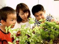 魚の水槽と水耕栽培が合体 無農薬野菜が育つ「アクアポニックス」とは