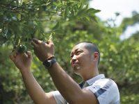 実家のレシピで熊本県表彰事業金賞受賞 未来へ伝えたい「農家のおやつ」