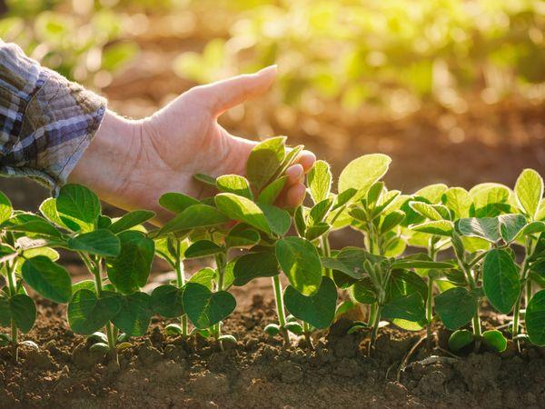 持続可能な農業を目指して 国際GAP認証「グローバルGAP」