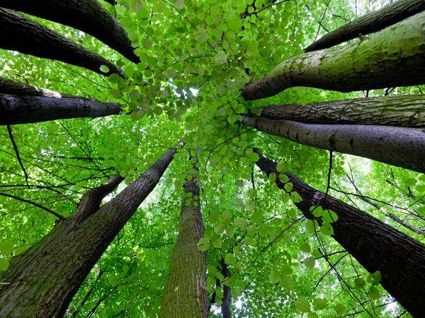 樹木の保護・保全のスペシャリストへ「樹木医」制度