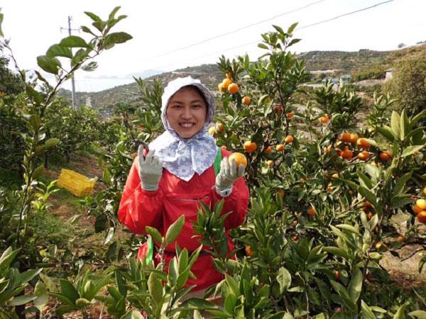 北海道・愛媛・沖縄のJAが合同で企画した農作業アルバイト