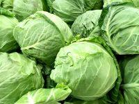 四季を通して大活躍! キャベツの栄養と保存法【野菜ガイド】