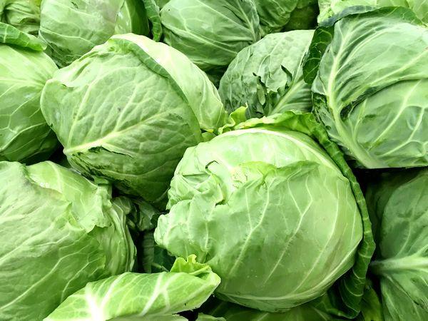 四季を通して大活躍! キャベツの栄養と保存法【野菜と果物ガイド】