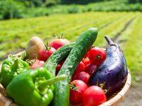 オーダーメイド野菜って? 生産特化する農家もいる?行政が支援する動きも