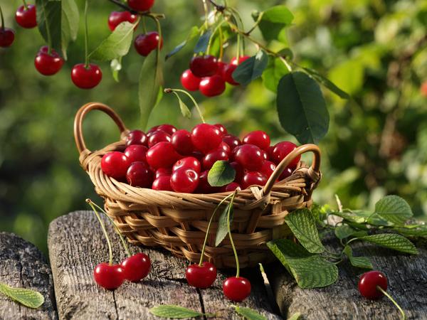 【47都道府県の地域食材】だだちゃ豆やラ・フランス!山形県の名産品・特産品