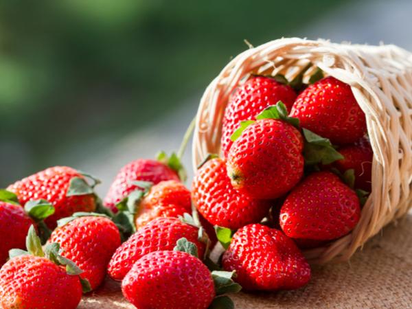 【47都道府県の地域食材】とちおとめにスカイベリー!栃木県が誇るイチゴ