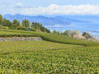 豊かな海と山の魅力がいっぱい! 静岡県の名産品【47都道府県の地域食材】