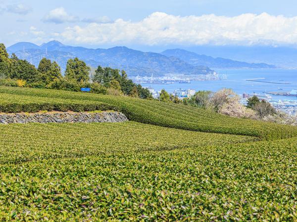 【47都道府県の地域食材】海の幸から山の幸まで魅力がいっぱい 静岡県の名産品